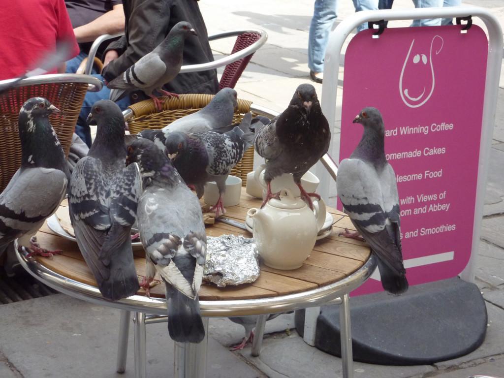 birds-bath