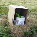 Guern-Hedge-Veg